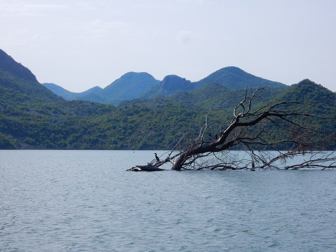 2 - Virpazar by train - Stunning lake skadar