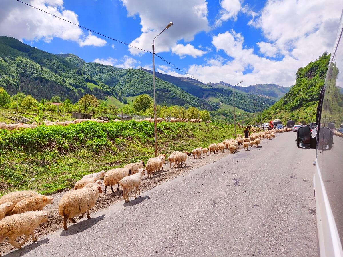 Top 5 things to see in Georgia - The road to Kazbegi
